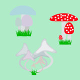 Inedible mushrooms of different kinds Stock Photo