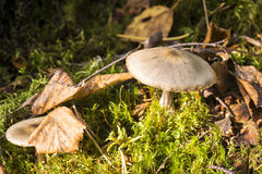 Inedible mushrooms in summer forest Stock Images