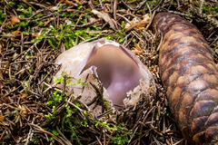 Free . Inedible Uncultivated Mushrooms. Stock Photos - 75684653