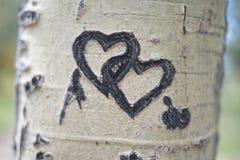 Ineinander greifenherzen schnitzten im Baum lizenzfreies stockfoto