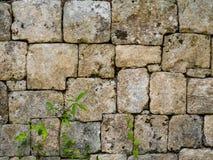 Ineinandergreifende Steinwand eines Mayatempels im mexikanischen Dschungel lizenzfreie stockfotografie