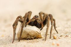 ineteresting αράχνη Στοκ Φωτογραφίες