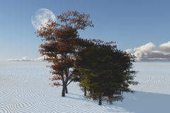 Inexplicable trees in desert Royalty Free Stock Images