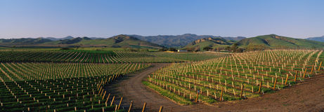 Ineyards in the Santa Ynez Valley Royalty Free Stock Images