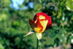 Inez Grant Parker Memorial Rose Garden Fotografia Stock
