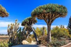 Inez Pomnik Grant Parker Wzrastał Pustynnego Ogród - Fotografia Stock