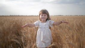 Infância feliz, corridas pouco de sorriso da criança e para tocar nos spikelets riped do trigo no campo da colheita de grão vídeos de arquivo