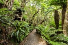 Infödd buske av Nya Zeeland royaltyfria bilder