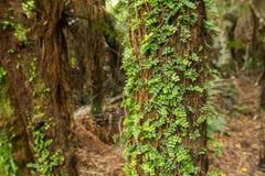 Infödd buske av Nya Zeeland royaltyfri foto