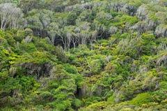 Infödd buske av Nya Zeeland arkivbild