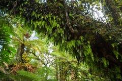 Infödd buske av Nya Zeeland fotografering för bildbyråer