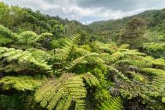 Infödd buske, Nya Zeeland royaltyfria foton