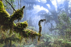 Infödd Cypress skog i Taiwan royaltyfria bilder