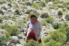 Infödd herde för gammal kvinna i nordliga Chile Arkivfoton