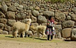 Infödd kvinna från Peru med lamor Arkivfoto