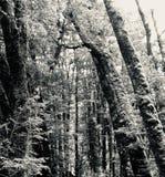 Infödd mossig skog på västkusten av Nya Zeeland arkivfoton