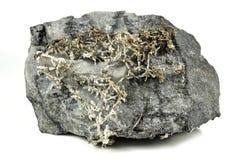 infödd silver Arkivfoton