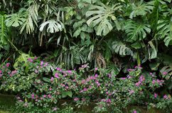 infödd vegetation royaltyfria bilder