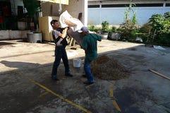 Infödda kaffebryggare i Brasilien inverkan av armod på fattiga neighbourhoods i Belize orsaka kocken för jordbruks- utveckling Fotografering för Bildbyråer