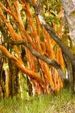 Treestammar Royaltyfria Bilder