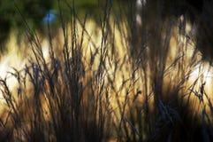 Infödda sommargräs Arkivfoton