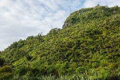 Inföding Bush av västkusten, Nya Zeeland fotografering för bildbyråer