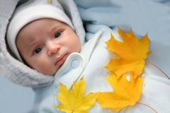 Infant and autumn yellow maple leaf Royalty Free Stock Images