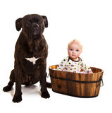Infant baby with dog Royalty Free Stock Images