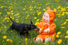 Infant baby with dog. Infant baby girl with little dog dandelion meadow pet Stock Photos