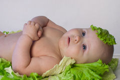 Cute newborn baby in the cabbage Stock Photos