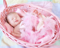Infant in a Basket Royalty Free Stock Photography