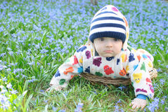 Infant boy in basket snowdrops Stock Image