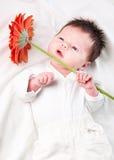 Infant boy Stock Photography