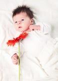 Infant boy Royalty Free Stock Image