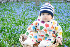 Infant boy sit basket snowdrops Royalty Free Stock Image