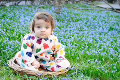Infant boy sit snowdrops field Stock Photography