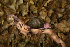 Infant Fantasy Portrait: Snail Baby Royalty Free Stock Photo