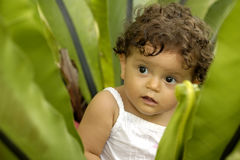 Infant in Garden. A toddler sits in a lush green tropical plant Royalty Free Stock Photo
