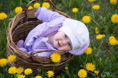Infant girl in basket. Infant smiling girl sit harvesting basket dandelion field