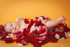 Infant girl lying on petal of red and pink roses Royalty Free Stock Photography