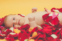 Infant girl lying on petal of red and pink roses Stock Photos