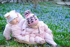 Infant girls sit basket snowdrops Stock Photos