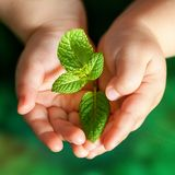 Infant hands holding green plant. Macro close up of baby hands holding small green plant Stock Image