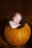 Infant Sleeping in Pumpkin. Artistic portrait of a newborn baby asleep in a hollowed out pumpkin. He is snuggled in with a crocheted blanket and the image Royalty Free Stock Photo