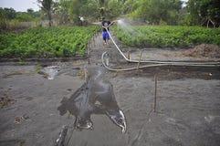 INFANTE DE MARINA COSTERO DE LA REGIÓN AGRÍCOLA Imagen de archivo libre de regalías