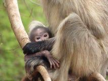 Infante, un bambino della scimmia Immagine Stock Libera da Diritti