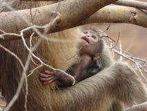 Infante, un bambino della scimmia Fotografie Stock Libere da Diritti