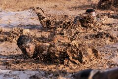 Infantry training in mud Stock Photography