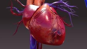Infección del sistema circulatorio ilustración del vector