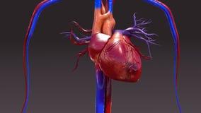 Infección del sistema circulatorio libre illustration